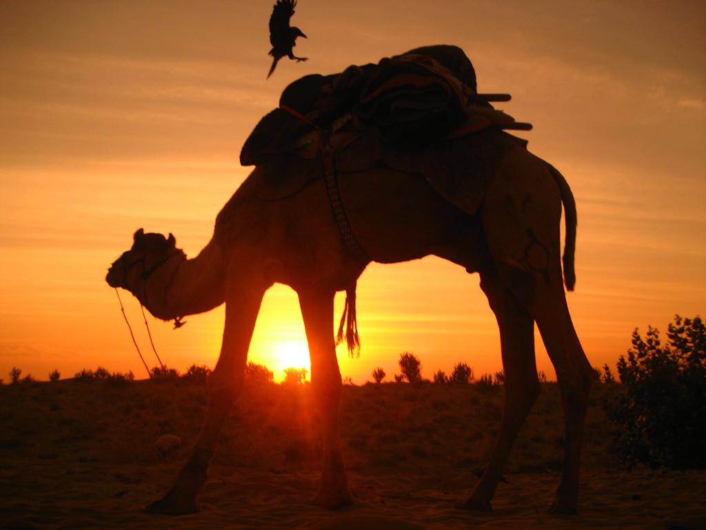Mon safari en Afrique s'est parfaitement déroulé !